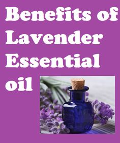 benefits of lavender essential oil// lavender oil uses// lavender oil benefits// uses for lavender oil// lavender uses oil// lavender oils// lavender oil for hair// lavender essential oil// lavendar oil benefits// how to use lavender oil Lavender Oil For Hair, Lavender Oil Uses, Lavender Oil Benefits, Crypto Bitcoin, Strawberry Plants, Beautiful Fruits, Hair Oil, Detox Drinks, Hair Care