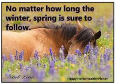 Spring is coming!  Happy Horse Healthy Planet is dedicated to educating and assisting horse owners in learning methods for earth-friendly horse care.