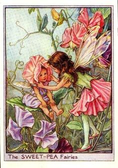 What are flower fairies? Associated with the paintings of English illustrator Cicely Mary Barker, flower fairy art and gardens . Cicely Mary Barker, Sweet Pea Flowers, Fairy Pictures, Vintage Fairies, Love Fairy, Beautiful Fairies, Flower Fairies, Fairy Art, Fantasy Art
