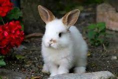 conejos tiernos imagenes - Bing images