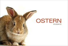 Süßer Hase Animals, Fashion, Cute Bunny, New Fashion, Easter Activities, Moda, Animales, Animaux, Fashion Styles