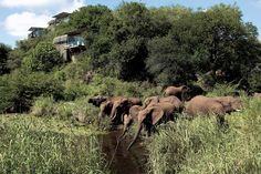 Singita Lebombo Lodge Another magical place to experience what nature has to offer. We stayed right up there.