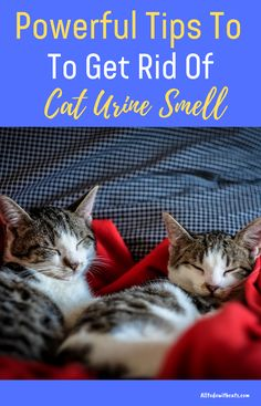 Discover how to get rid of cat urine smell and finally, enjoy a clean odor free . - Cat Care Tips - Cleaning Cat Urine, Remove Cat Urine Smell, Cat Pee Smell, Cat Urine Smells, Cat Urine Remover, Pet Urine, Pet Odors, Pet Odor Eliminator, Cat Care Tips