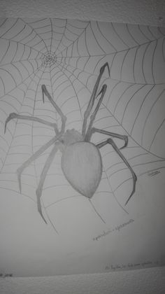 spider drawing Spider Drawing, Pencil Art Drawings, Bugs, Halloween, Drawings, Animales, Beetles, Spooky Halloween, Insects