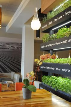 Introducing the iconic LYFE Kitchen Herb Wall.  (PRNewsFoto/LYFE Kitchen)