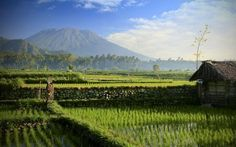 Sidemen Bali -- Photo by Matthias Hauser, taken 9-28-13 -- Early morning panorama of mount Agung on the way from Sidemen to Ahmed, Bali. -- National Geographic Your Shot