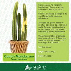 cactus mandacaru