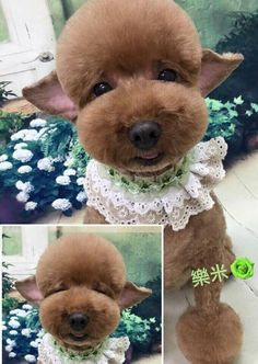 -repinned-Asian inspired dog grooming