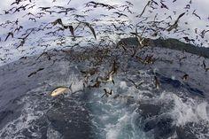 Tuna and birds!