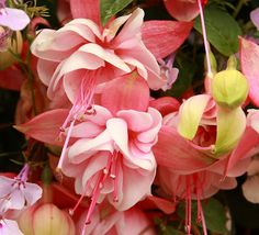 Fuschia in Talkeetna by Alaskan Dude, via Flickr