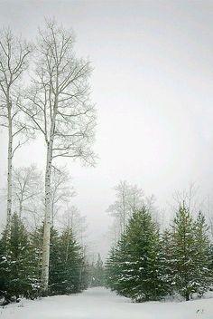 Winter snow: so peaceful. Winter Szenen, Winter Love, Winter Magic, Winter Trees, Winter Colors, Winter White, Snowy Day, Snow Scenes, Winter Beauty