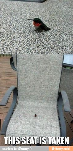 This seat is taken / iFunny :)