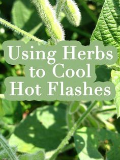 Using Herbs to Cool Hot Flashes