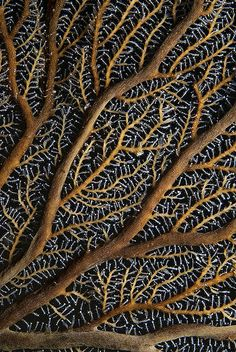 Fractal branching patterns in nature - Hydroid Detail