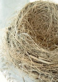 Texture: you can feel the rough wool rope just from looking at it. Bird Cages, Bird Nests, Elements Of Art, Love Is Sweet, Wabi Sabi, Natural World, Bird Feathers, Textures Patterns, Bird Houses