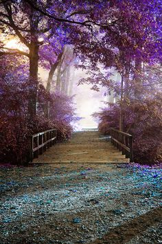 ~~Wonderland | magical forest path by EliseEnchanted~~