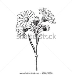 Wildflower Cutout | Stock Photos, Royalty-Free Images & Vectors - Shutterstock