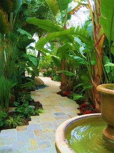 Beautiful backyard walkway with Heliconias, Banana Plants, Bird of Paradise, and lust tropical landscape! The water fountain on the pathway brings the beauty to life!