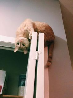My wife found Hobbes like this. He was stuck and needed help getting down.