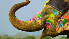 Festival of colors / India