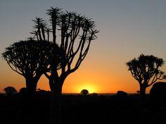 Reisebericht Namiba: Keetmanshoop Köcherbaumwald