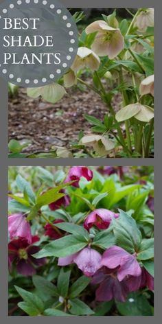 My shade garden... Flowering shade perennials, come back year after year, and are maintenance free!!