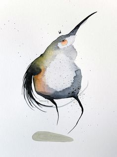 watercolors 2014 - bird series by Philip Bosmans, via Behance