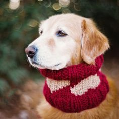Celebrate Valentine's Day by knitting a cowl with hearts for your dog! See how to make this basic cowl with colorwork hearts. Chart included