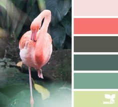 flamingo palette - color escape - gorgeous color palette inspiration idea - pinks and greens