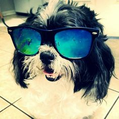 #Puppy #beutiful :-*