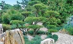 Ob einzelnes Kiesbeet oder gewundener Kiesweg – wir erklären, wie man einen Kiesgarten anlegt.