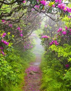 .there's this path, that meanders, and the flowers, ah the flowers are heavenly...