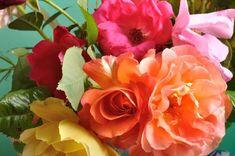 Tetves a rózsád? Flowers, Plants, Plant, Royal Icing Flowers, Flower, Florals, Floral, Planets, Blossoms