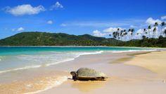 Sabbia dorata e mare cristallino: ecco le spiagge preferite dai viaggiatori…