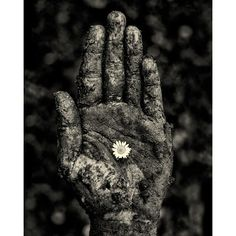 Hope Black and White Photographic Print Hand Flower ($65) ❤ liked on Polyvore featuring home, home decor, wall art, black and white photo posters, photo wall art, signed poster, flower stem and black white poster