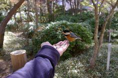 那須塩原天皇の間公園 ヤマガラ http://wp.me/p3kxHi-7N