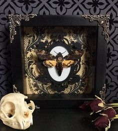 RESERVED FOR MORGANSMOM2009*** Custom Deaths Head Moth Shadow Box, Taxidermy, Real Butterfly, Framed Butterfly, Preserved Butterfly by beyondthedarkveil on Etsy https://www.etsy.com/ca/listing/489268911/reserved-for-morgansmom2009-custom