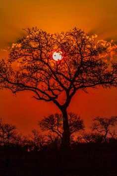 ~~Sun Set in Kruger ~ iconic Africa by Jacques de Klerk~~