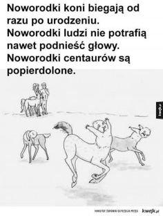 Very Funny Memes, Wtf Funny, Funny Cute, Hilarious, Funny Images, Funny Pictures, Hahaha Hahaha, Funny Lyrics, Polish Memes