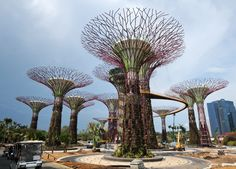 Towering Supertrees Grove, which are part of horticultural themed gardens, sit in the Garden by the Bay in Singapore.
