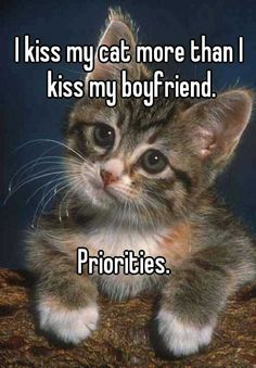 Cat Care Top Tips And Advice. Photo by Monica R. All these things you get as a cat owner. Funny Animal Images, Funny Animals, Cute Animals, Funny Horses, Animal Pictures, Crazy Cat Lady, Crazy Cats, I Love Cats, Cute Cats