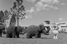 Vintage Disney - Dumbo, Walt Disney World 1970's...   Live shrubs, unfortunately, Disney doesn't do this anymore