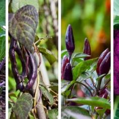 If You Use Vinegar in the Garden These 12 Miracles Can Happen Garden Soil, Garden Plants, Indoor Plants, Natural Beauty Recipes, Home Vegetable Garden, Container Gardening Vegetables, Diy Garden Projects, Growing Vegetables, Plant Care