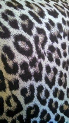 Venus Leopard