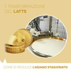 Aged PDO Asiago: how it is made. The transformation of the milk.