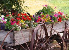 wagon full of summer flowers