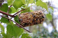 Easy bird feeders made from the mountains of toilet roll tubes I have! Homemade Bird Feeders, Diy Bird Feeder, Easy Bird, Creation Crafts, Toilet Paper Roll Crafts, Paper Birds, Plate Crafts, Natural, Things To Do