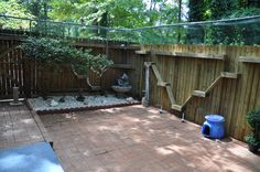 Outside Cat Enclosures | Outdoor enclosures