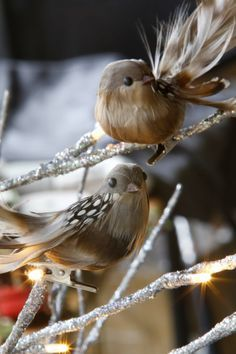 Gorgeous bird decorations
