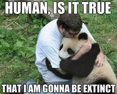 Frightend Panda after Earthquake. That's it, I'm moving to Asia right now to hug the scared pandas. Too precious! Cute Bear, Cute Panda, Big Bear, Amor Animal, Mundo Animal, Baby Animals, Funny Animals, Cute Animals, Wild Animals